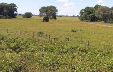 Pantanal - terra seca