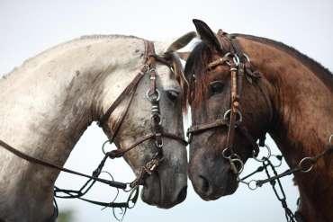 Pantanal - cavalo