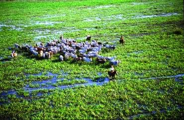 Pantanal - clima